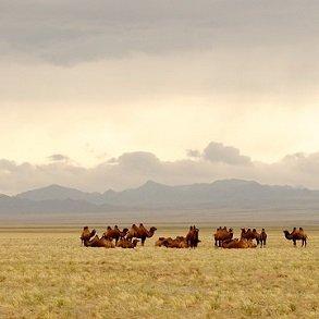Fra Moskva til Bejing via Mongoliet – 15 dage